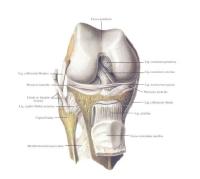 *снимка Синелников - Анатомия на човека томI